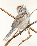 <b>Tree Sparrow</b>, 2016<br>Watercolor on paper, 50x40, 56x46 inches framed<br>$5600