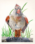<b>Female Cardinal III</b>, 2016<br>Watercolor on paper, 40x33 image unframed<br>$3650