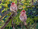 <b>House Finch</b>, 2015<br>Watercolor on paper, 22x30 inches<br>$1900