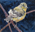 <b>Molting Lesser Gold Finch</b>, 2016<br>Watercolor on paper, 40x43, 43x46 inches framed<br>$5200