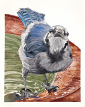 <b>Juvenile Blue Jay</b>, 2016<br>Watercolor on paper, 40x33 image, 46x39 inches framed<br>$4200