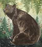 <b>Black Bear</b>, 2015<br>Aquatint Etching, edition varied of 25, 17x16 inches unframed<br>$700